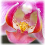 Orchid Extract face mask
