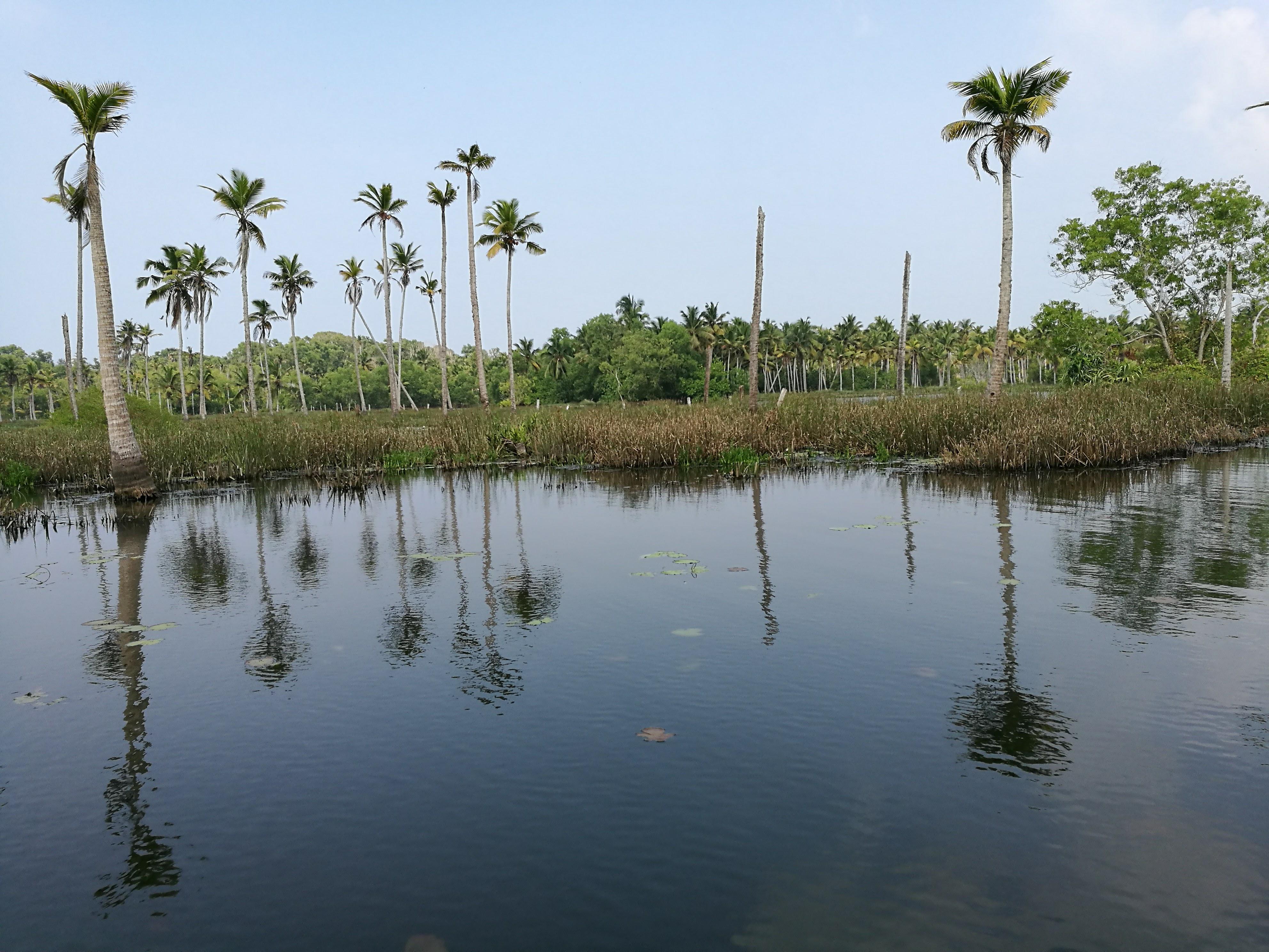Palms at Poovar